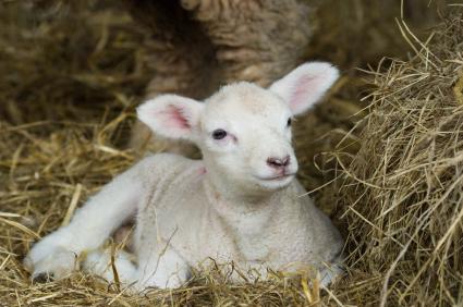 God Is My Shepherd God Is